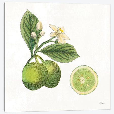 Classic Citrus III Canvas Print #WAC7080} by Sue Schlabach Art Print