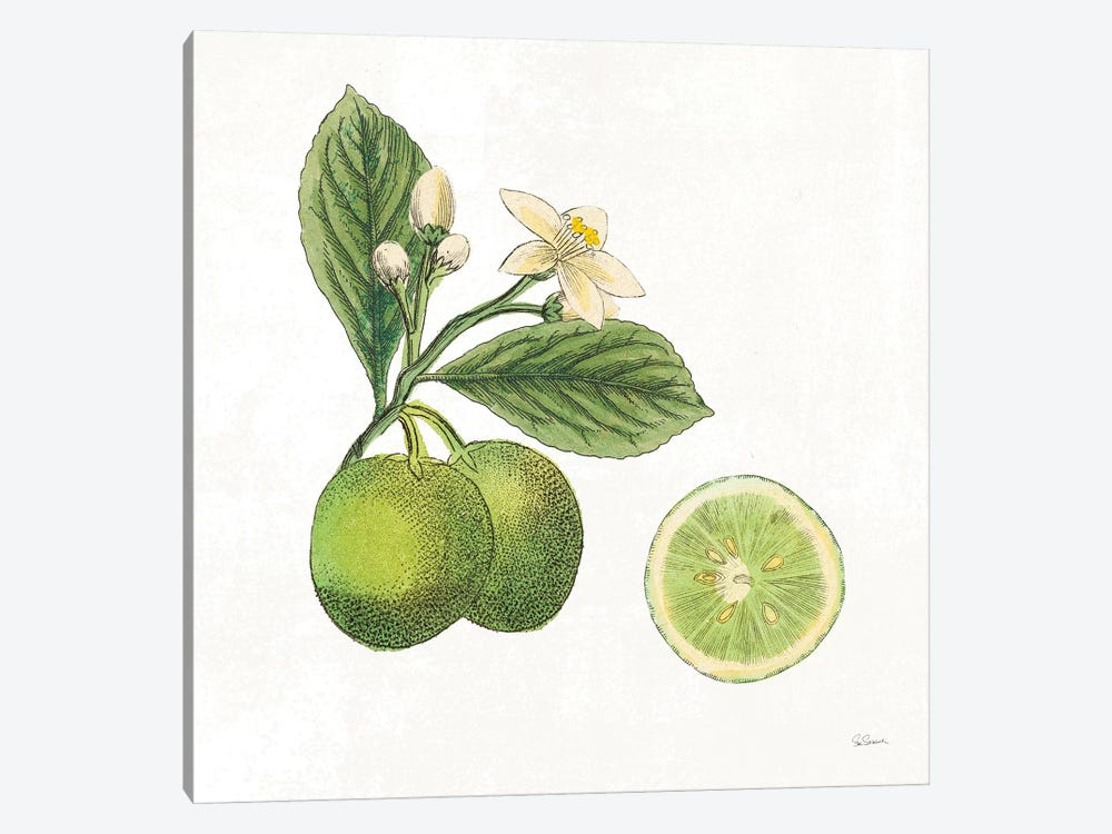 Classic Citrus III 1-piece Canvas Wall Art