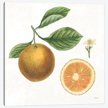 Classic Citrus IV Canvas Print #WAC7081} by Sue Schlabach Canvas Print