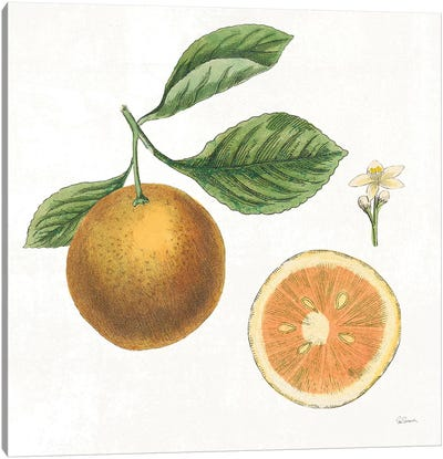Classic Citrus IV Canvas Art Print
