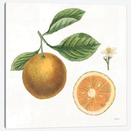 Classic Citrus IV Canvas Print #WAC7081} by Sue Schlabach Canvas Print