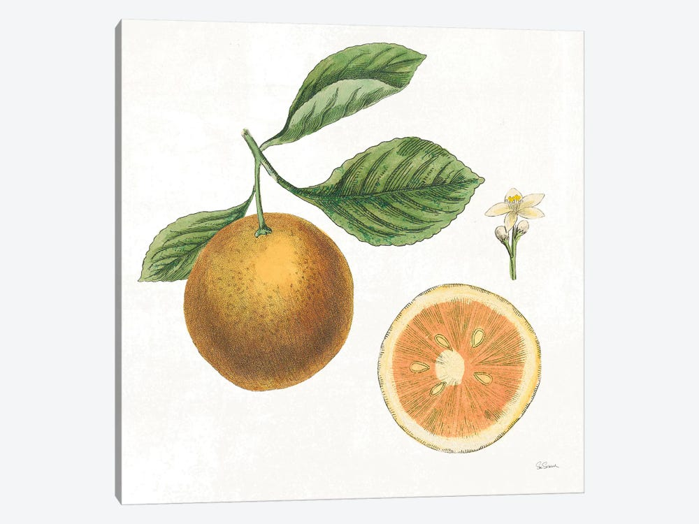 Classic Citrus IV by Sue Schlabach 1-piece Canvas Art Print