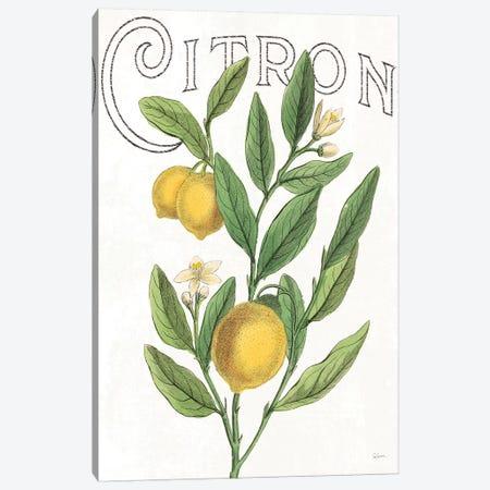 Classic Citrus V Canvas Print #WAC7082} by Sue Schlabach Canvas Art Print
