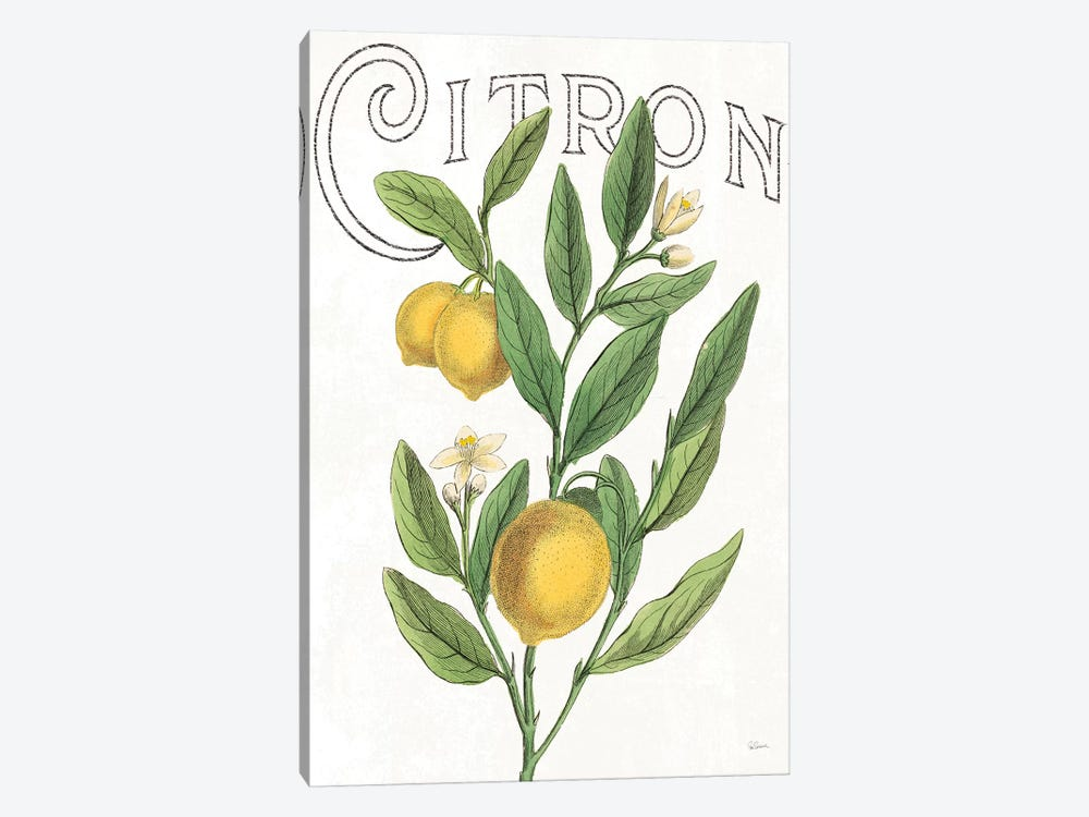 Classic Citrus V by Sue Schlabach 1-piece Canvas Art