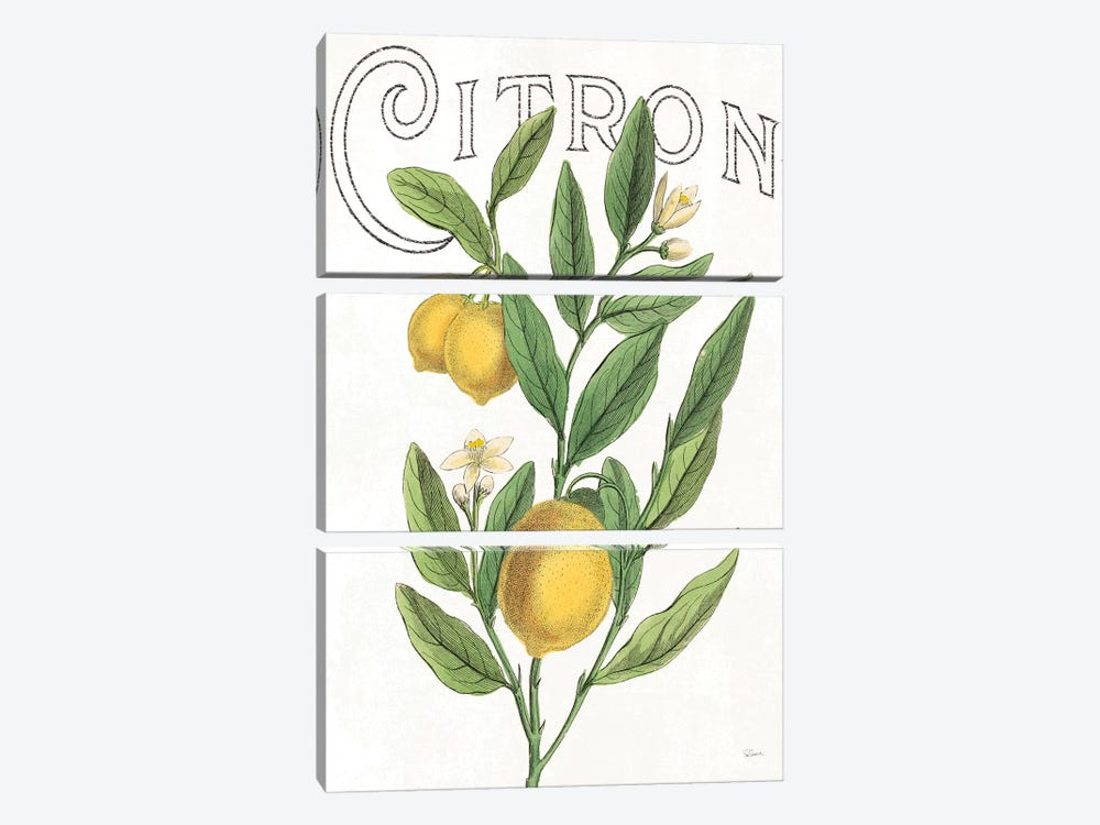Classic Citrus V by Sue Schlabach 3-piece Canvas Wall Art