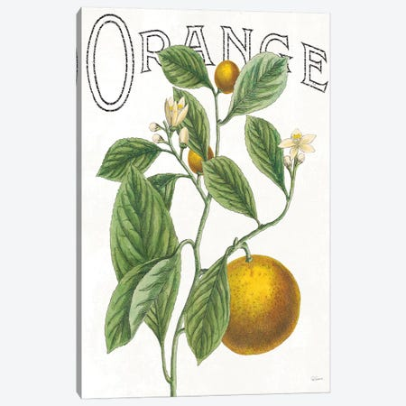 Classic Citrus VI Canvas Print #WAC7083} by Sue Schlabach Canvas Art Print