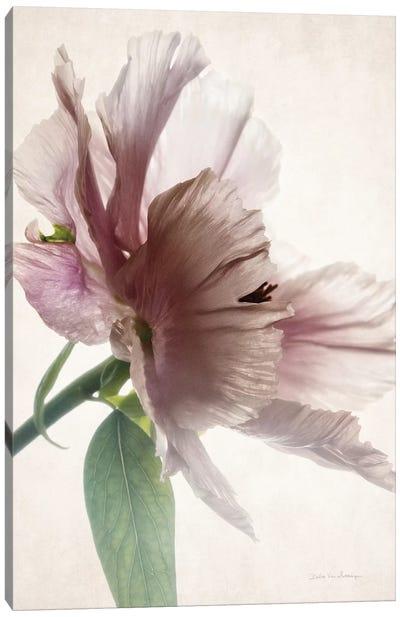 Translucent Peony I Canvas Art Print
