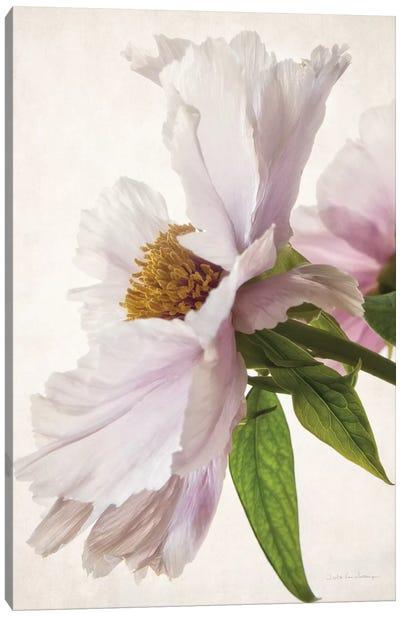 Translucent Peony II Canvas Art Print