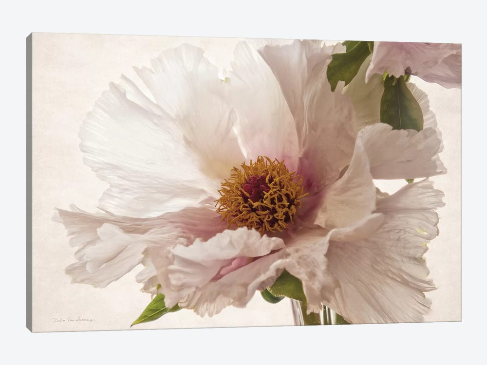 Translucent Peony III by Debra Van Swearingen 1-piece Canvas Artwork