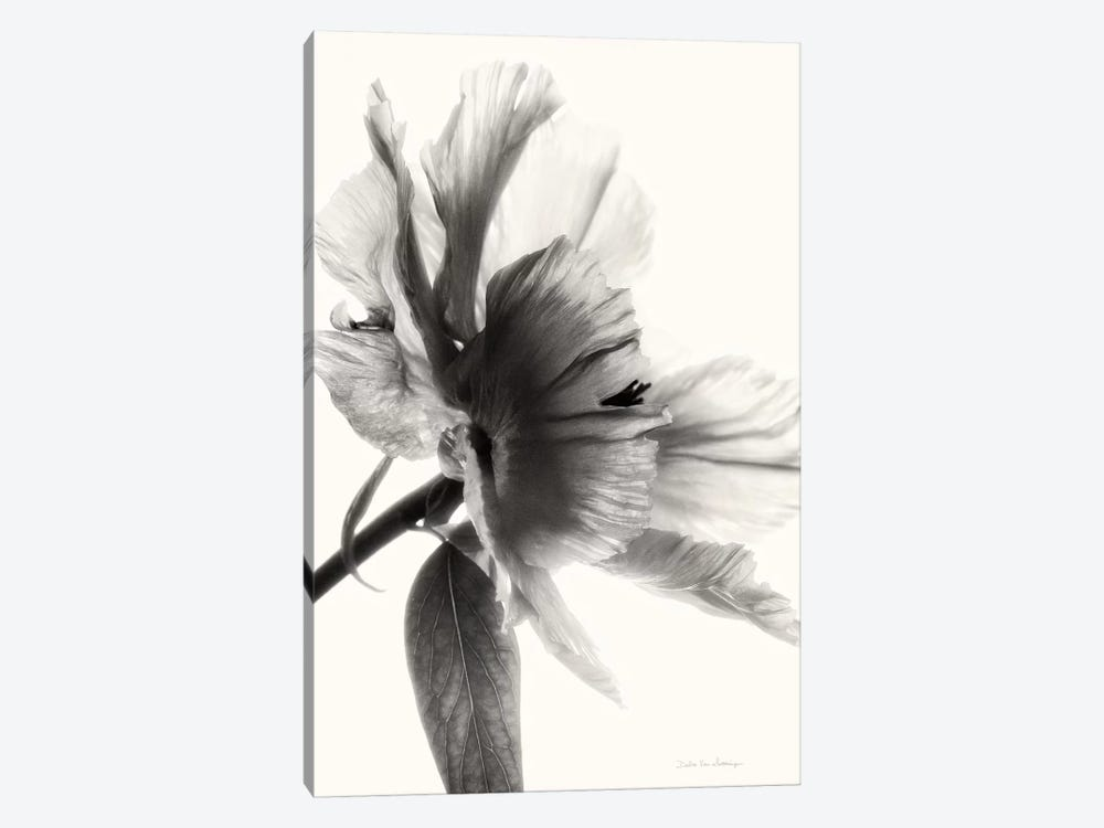 Translucent Peony, B&W I by Debra Van Swearingen 1-piece Canvas Art Print