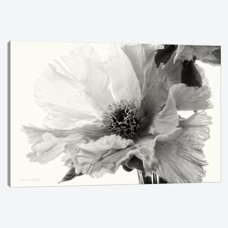 Translucent Peony, B&W III Canvas Print #WAC7213} by Debra Van Swearingen Canvas Artwork