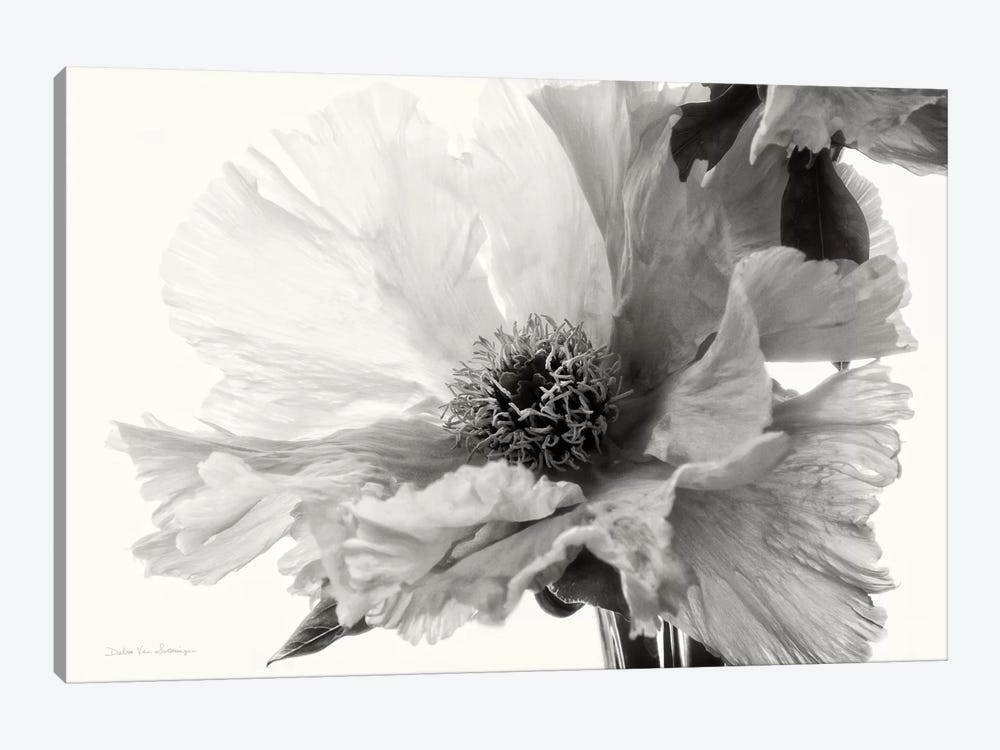 Translucent Peony, B&W III by Debra Van Swearingen 1-piece Canvas Print
