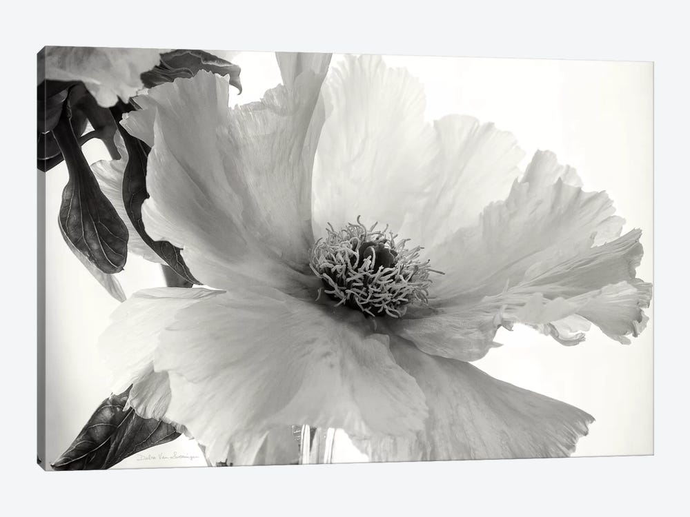 Translucent Peony, B&W IV by Debra Van Swearingen 1-piece Canvas Artwork