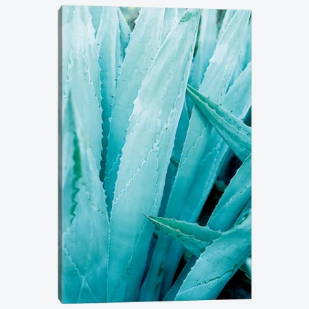 Abstract Agave I Canvas Print #WAC7215} by Elizabeth Urquhart Canvas Print