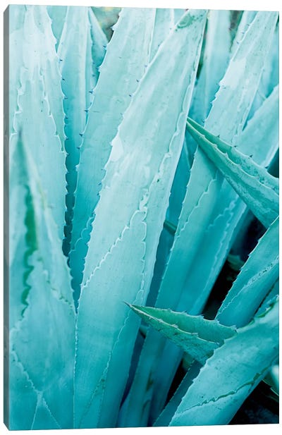 Abstract Agave I Canvas Art Print
