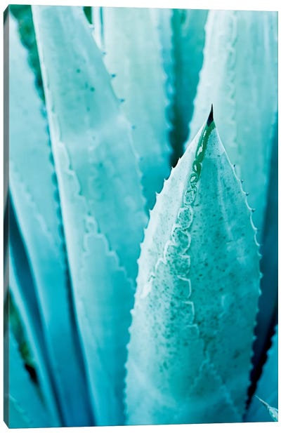 Abstract Agave II Canvas Art Print