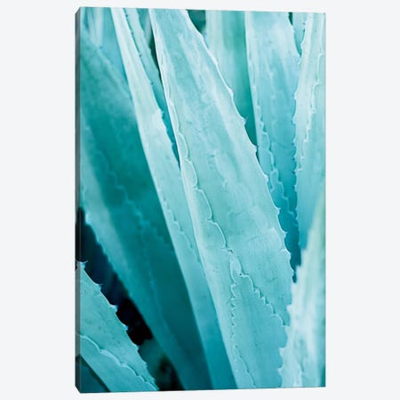 Abstract Agave IV Canvas Print #WAC7218} by Elizabeth Urquhart Canvas Art