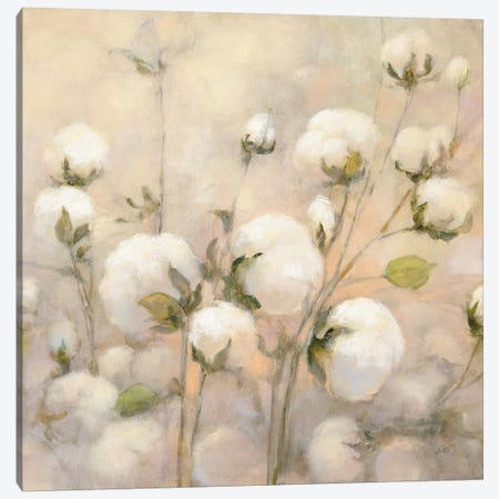 Cotton Field, Close Up Canvas Print #WAC7252} by Julia Purinton Canvas Wall Art