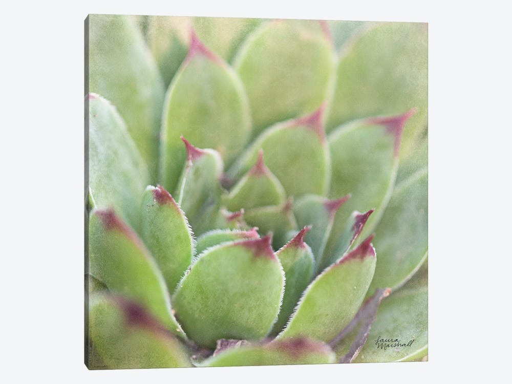 Garden Succulents I by Laura Marshall 1-piece Canvas Art Print