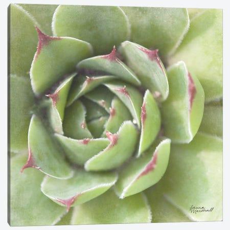 Garden Succulents II Canvas Print #WAC7283} by Laura Marshall Canvas Art Print