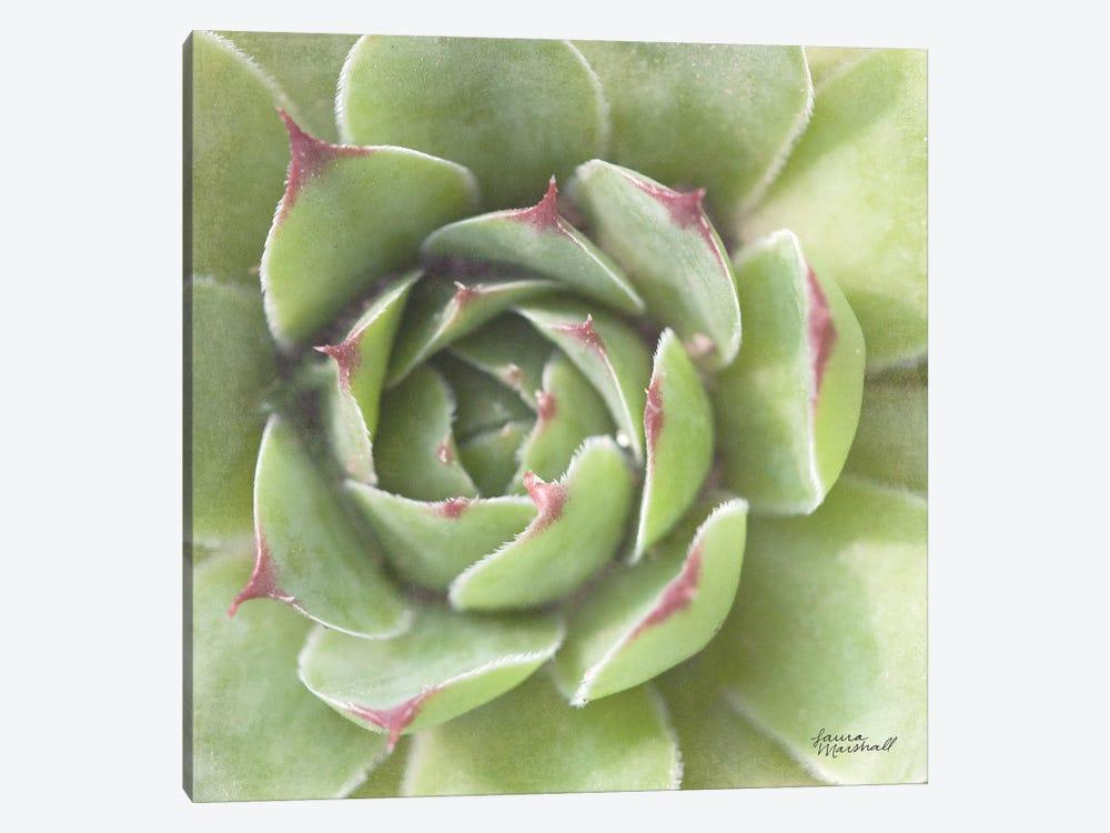 Garden Succulents II by Laura Marshall 1-piece Canvas Art