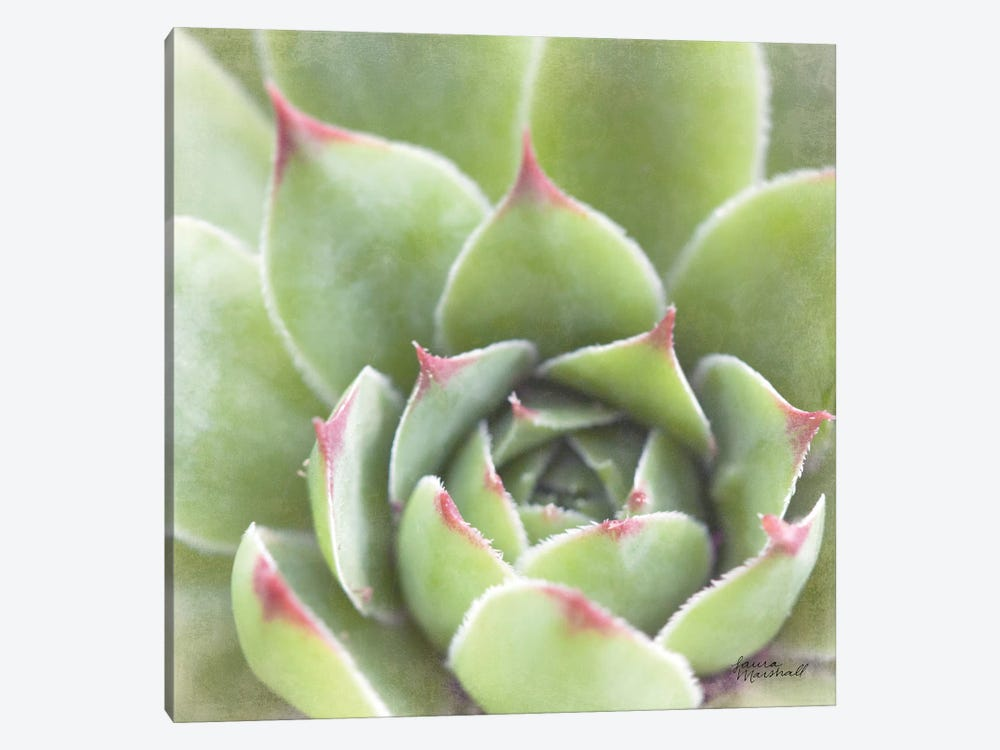 Garden Succulents III by Laura Marshall 1-piece Canvas Art Print