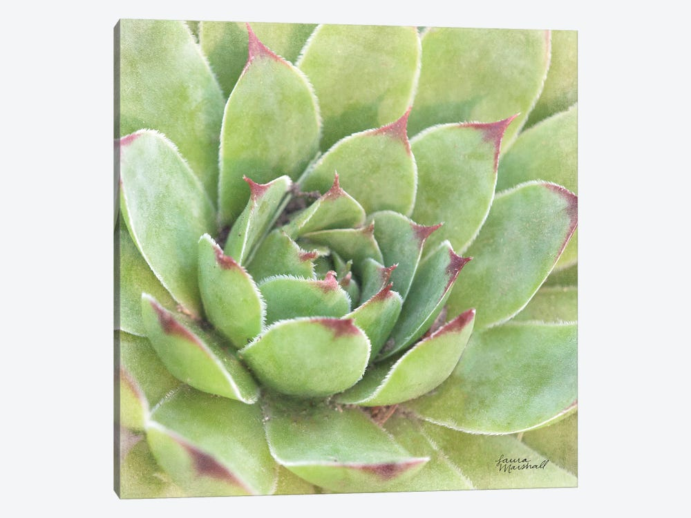 Garden Succulents IV by Laura Marshall 1-piece Canvas Wall Art