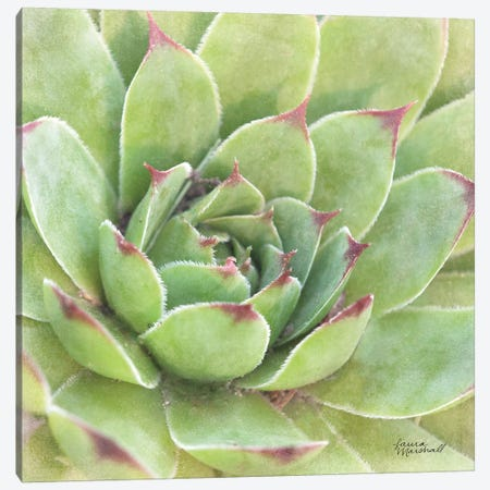 Garden Succulents IV Canvas Print #WAC7285} by Laura Marshall Canvas Art