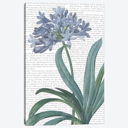 Summer Botanicals I Canvas Print #WAC7354} by Wild Apple Portfolio Canvas Artwork