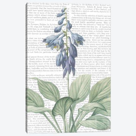 Summer Botanicals II Canvas Print #WAC7355} by Wild Apple Portfolio Canvas Artwork