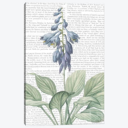 Summer Botanicals II Canvas Print #WAC7355} by Wild Apple Portfolio Canvas Artwork