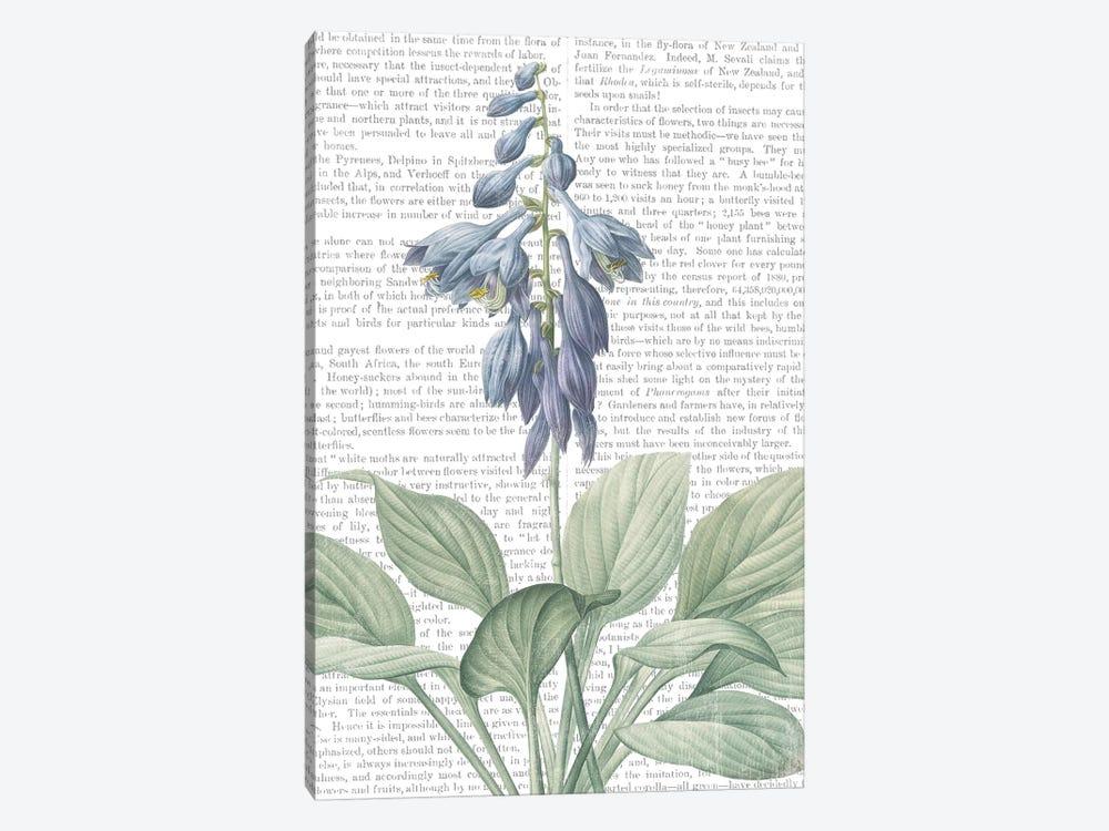 Summer Botanicals II by Wild Apple Portfolio 1-piece Canvas Artwork
