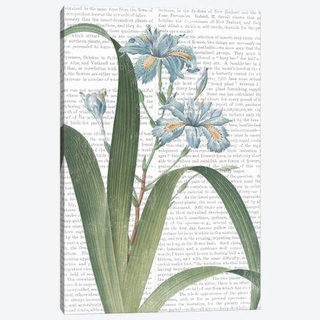 Summer Botanicals III Canvas Print #WAC7356} by Wild Apple Portfolio Canvas Art