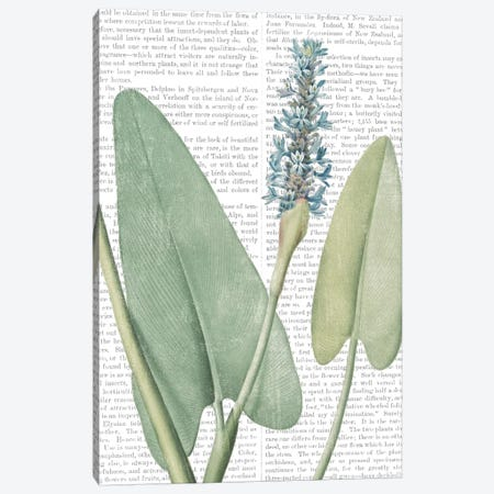 Summer Botanicals IV Canvas Print #WAC7357} by Wild Apple Portfolio Canvas Artwork