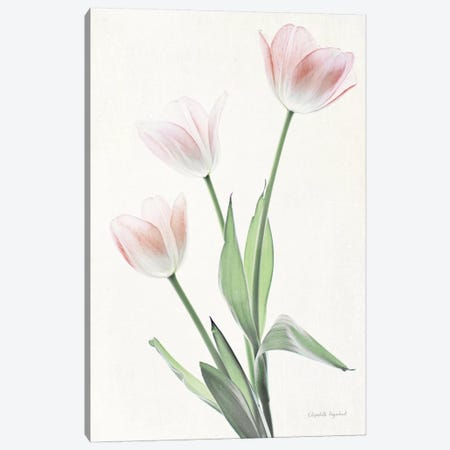 Light And Bright Floral I Canvas Print #WAC7375} by Elizabeth Urquhart Canvas Artwork