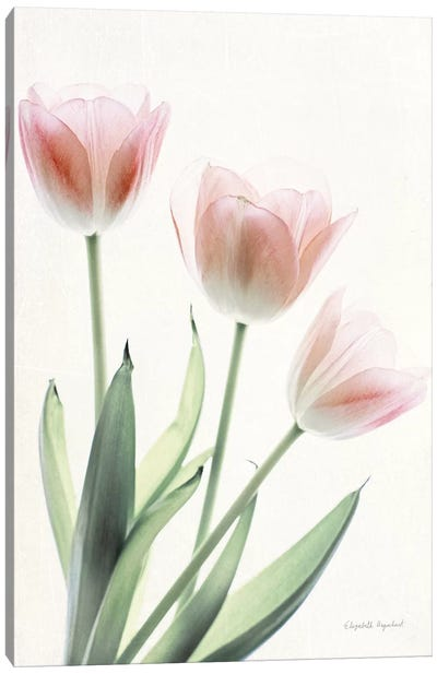 Light And Bright Floral II Canvas Art Print