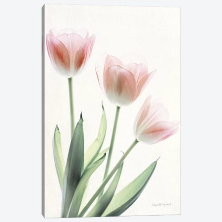 Light And Bright Floral II Canvas Print #WAC7376} by Elizabeth Urquhart Canvas Wall Art