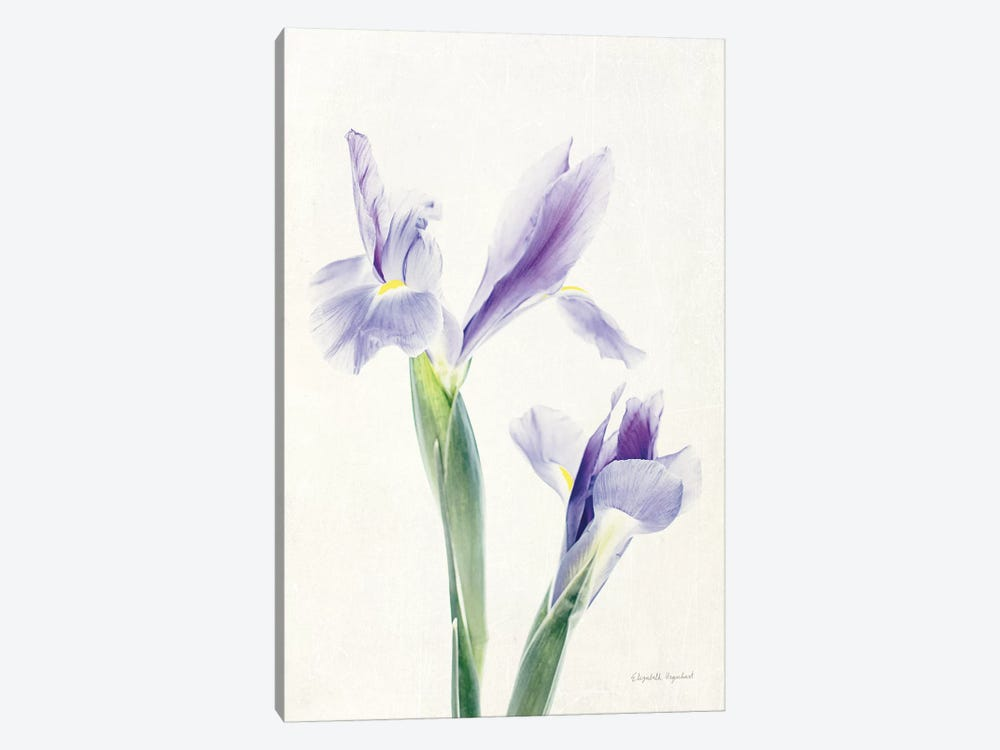 Light And Bright Floral III by Elizabeth Urquhart 1-piece Canvas Wall Art