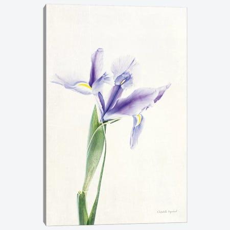 Light And Bright Floral IV Canvas Print #WAC7378} by Elizabeth Urquhart Art Print