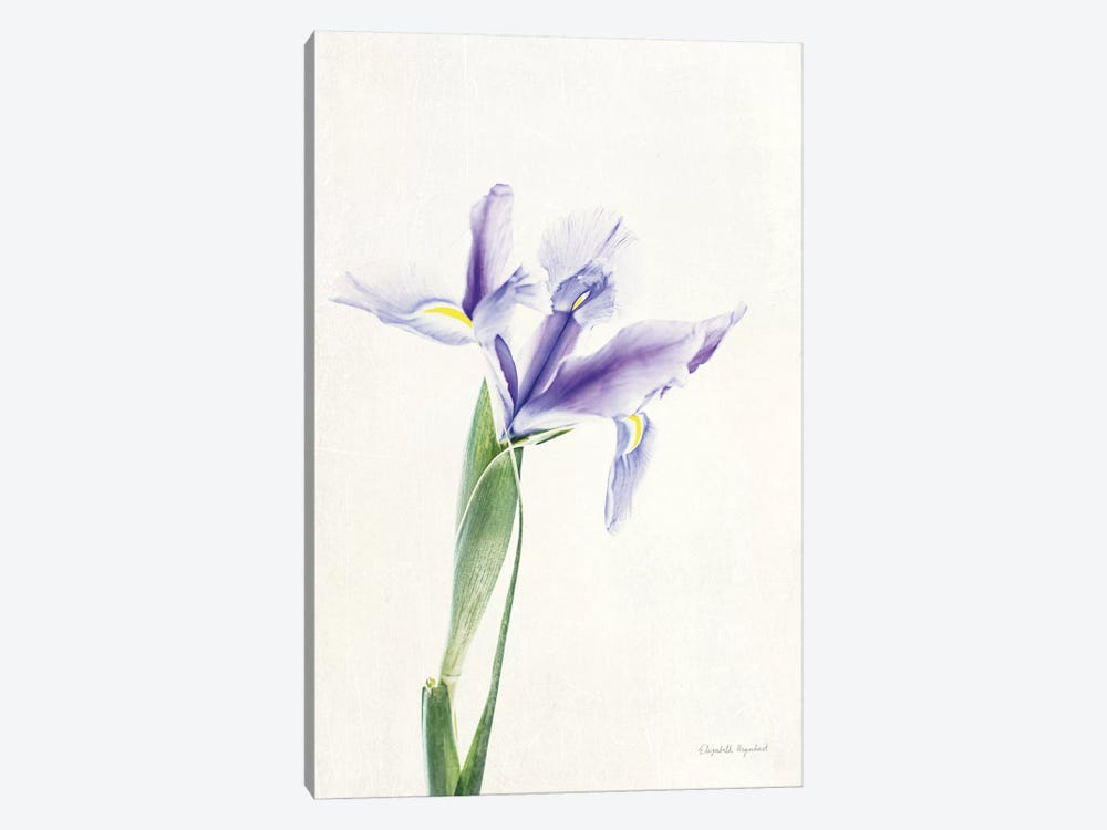 Light And Bright Floral IV by Elizabeth Urquhart 1-piece Art Print