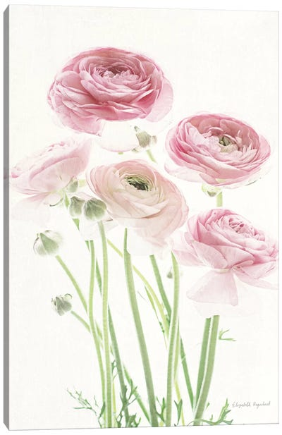 Light And Bright Floral V Canvas Art Print