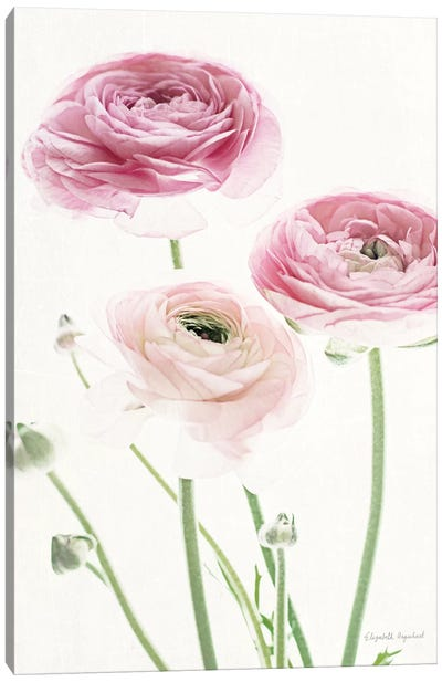 Light And Bright Floral VI Canvas Art Print