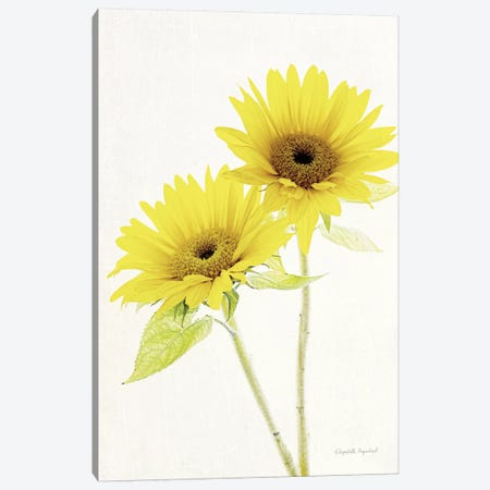 Light And Bright Floral VII Canvas Print #WAC7381} by Elizabeth Urquhart Canvas Wall Art