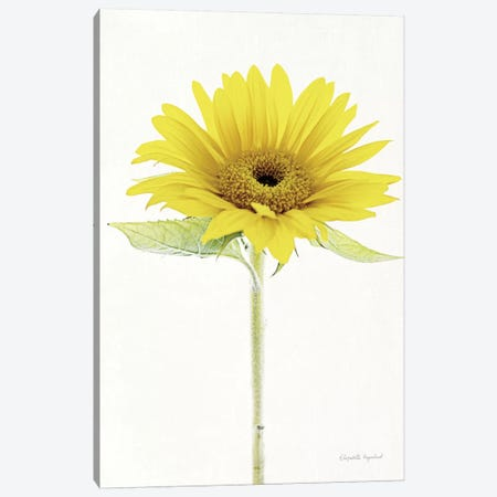Light And Bright Floral VIII Canvas Print #WAC7382} by Elizabeth Urquhart Canvas Wall Art