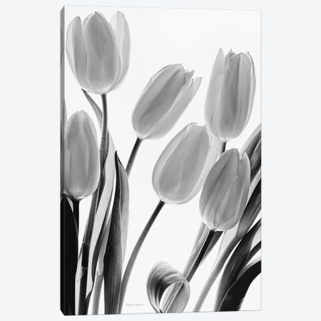 Shadows And Light I Canvas Print #WAC7383} by Elizabeth Urquhart Canvas Art