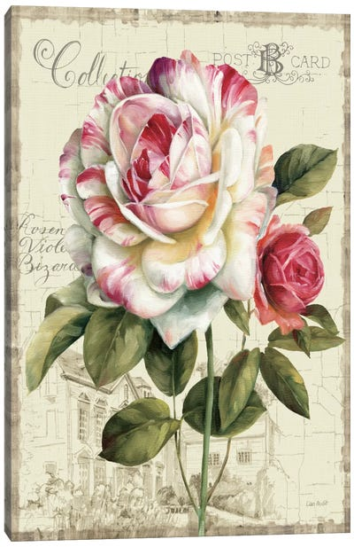Garden View III Rose Canvas Art Print
