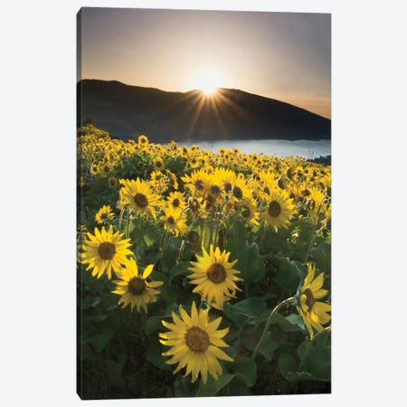 Columbia River Gorge Sunrise Canvas Print #WAC7498} by Alan Majchrowicz Canvas Wall Art