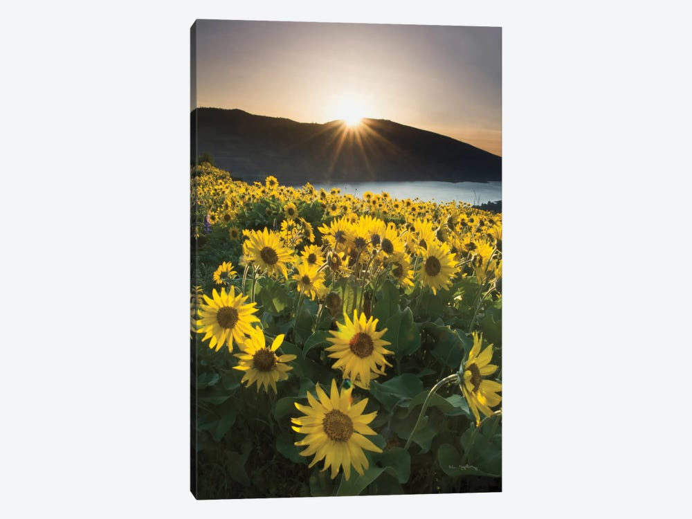 Columbia River Gorge Sunrise 1-piece Canvas Artwork