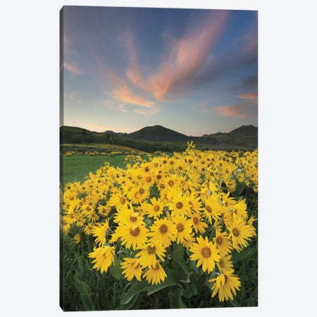 Methow Valley Wildflowers I Canvas Print #WAC7500} by Alan Majchrowicz Canvas Art