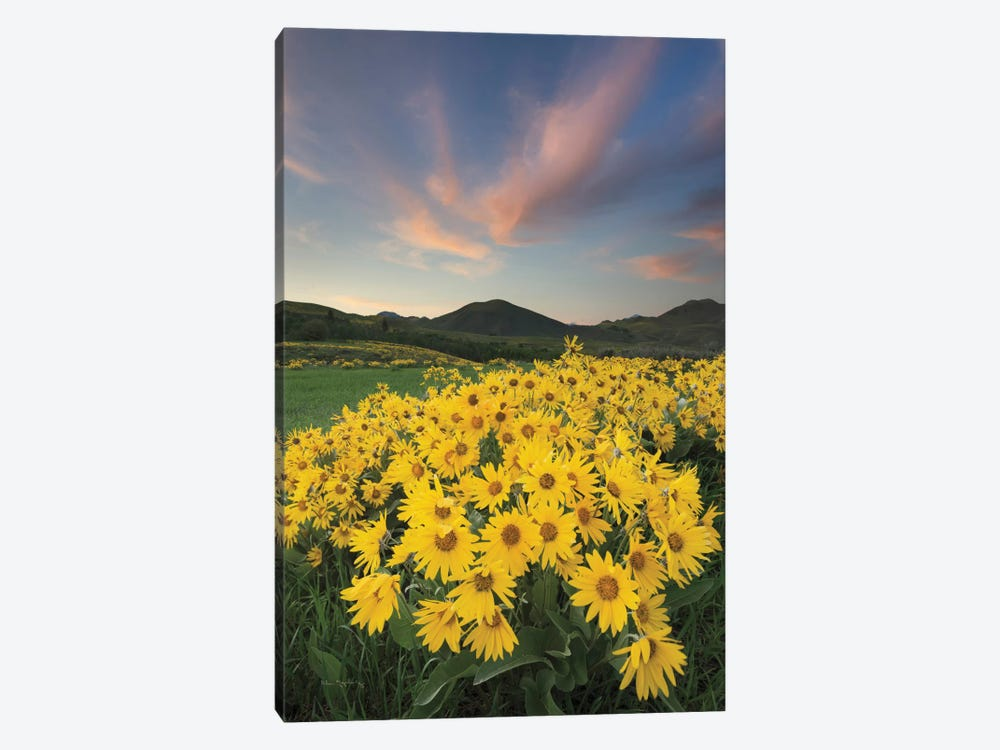 Methow Valley Wildflowers I 1-piece Canvas Artwork